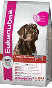 Eukanuba Labrador