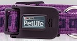 Powergrip Adjustable Collar (Purple)