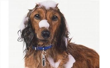 Shampoos Conditioners