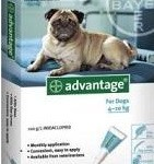Advantage Medium Dog Blue