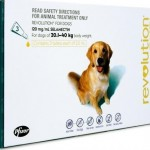 Revolution Extra Large Dog Green (20-40kg)