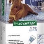 Advantage Extra Large Dog Grey