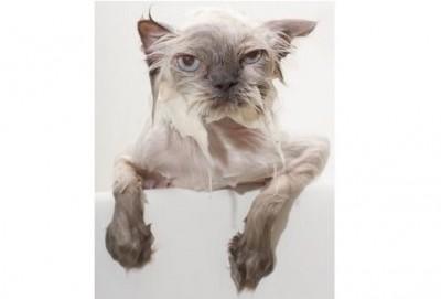Cat Shampoos Conditioners